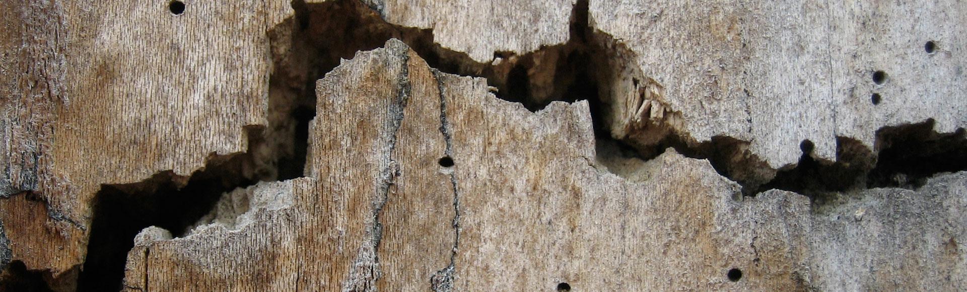 Chemischer Holzschutz?